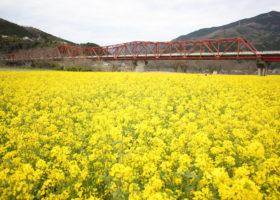 五郎の赤橋